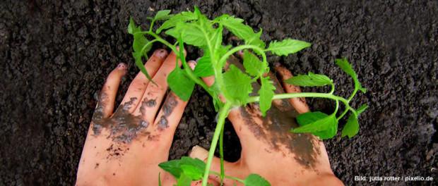 Biologischer Ackerbau