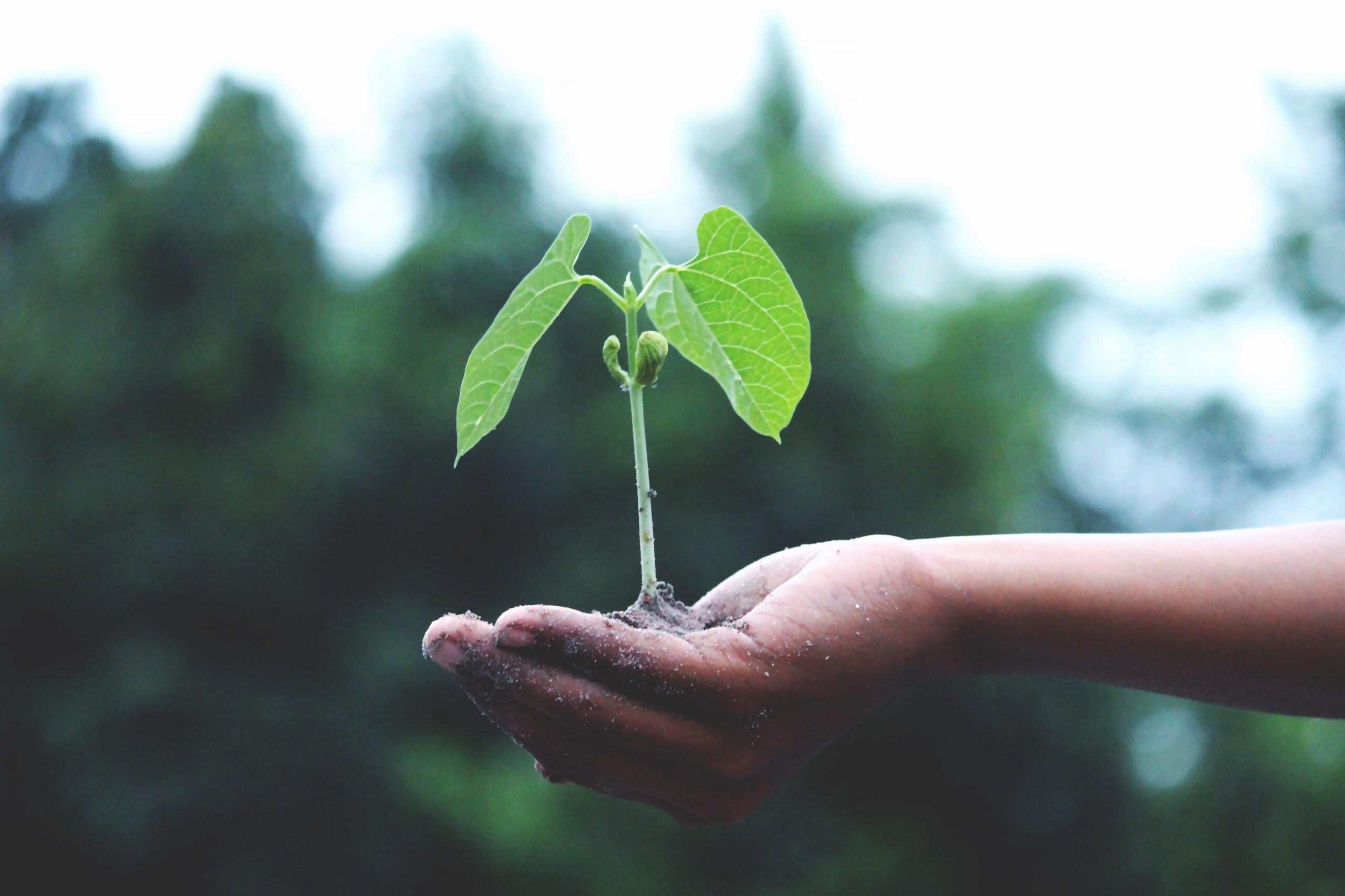 Seedbombs selbst herstellen