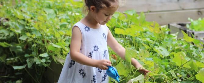 Kinder lassen sich schnell für das Gärtnern begeistern